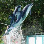 香川の穴場観光スポット!水族館・動物園 5選